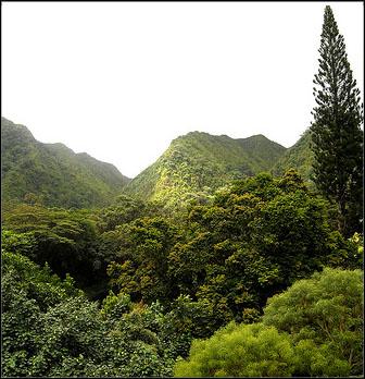 Lyon Arboretum Honolulu