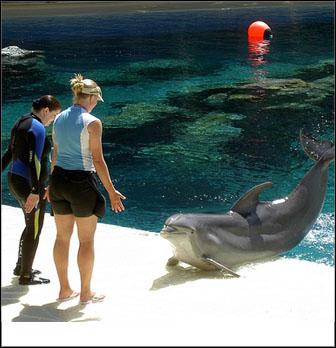 Siegfried & Roy's Secret Garden and Dolphin Habitat Las Vegas